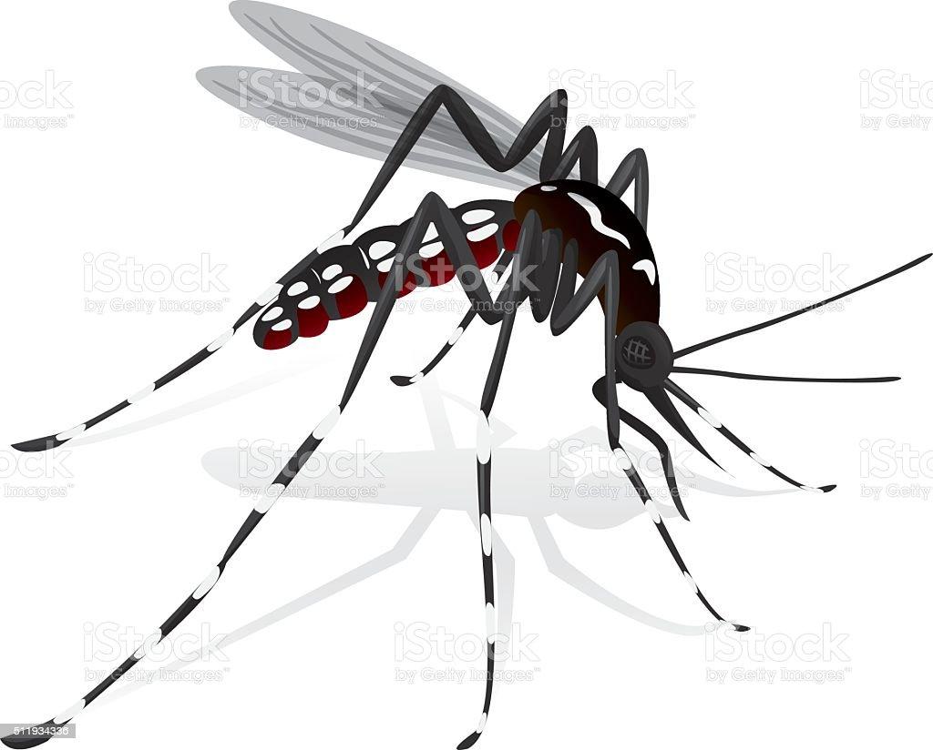 Aedes aegypti Mosquito mascot stilt vector art illustration