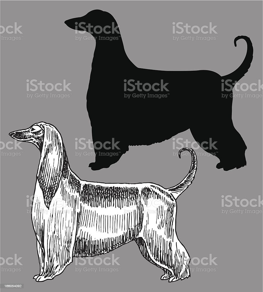 Afghan Hound - Dog, Domestic Pet royalty-free stock vector art