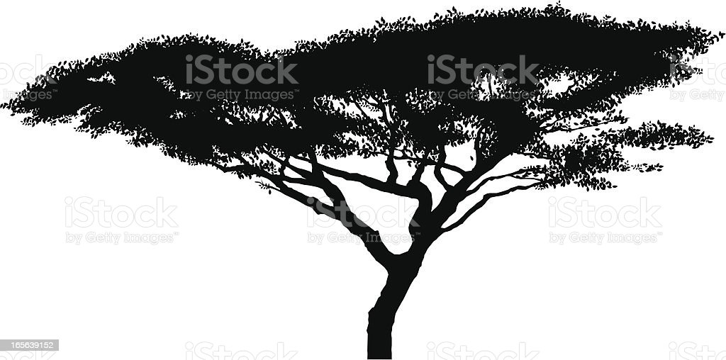 African acacia tree silhouette vector art illustration