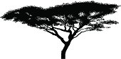 African acacia tree silhouette