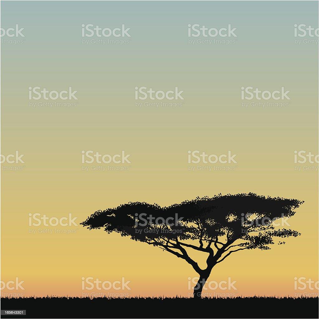 African Acacia tree vector art illustration