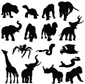 African animals in silhouette