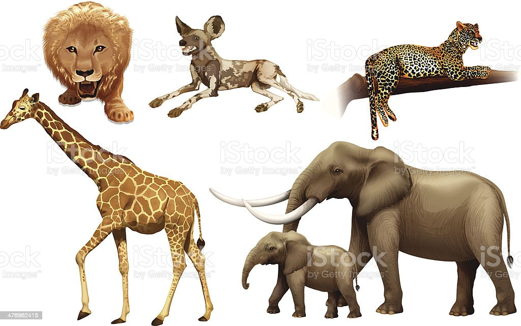 African animals vector art illustration