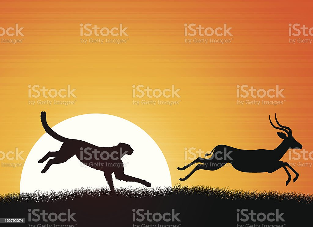African Cheetah and Antelope vector art illustration