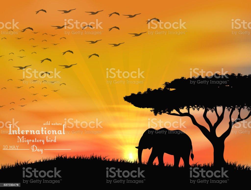 African elephant with flying birds on sunset sky vector art illustration