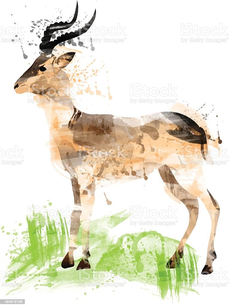 African gazelle watercolor vector art illustration