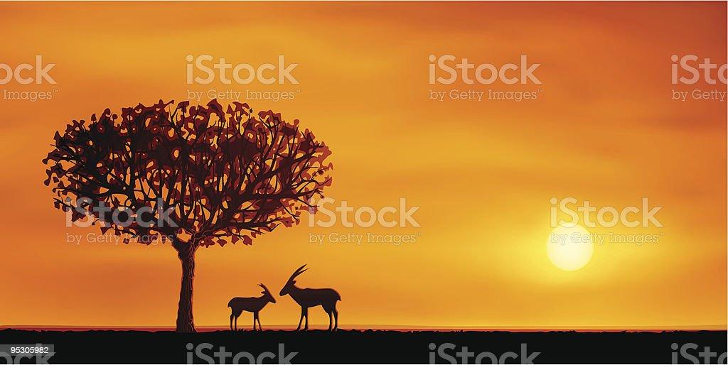 African savanna evening scenery vector art illustration