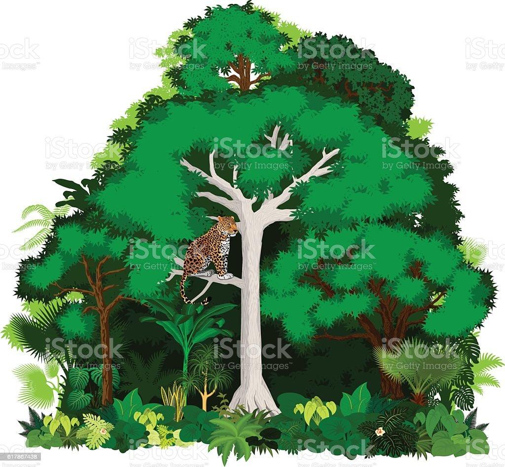 African vector jungle illustration. vector art illustration