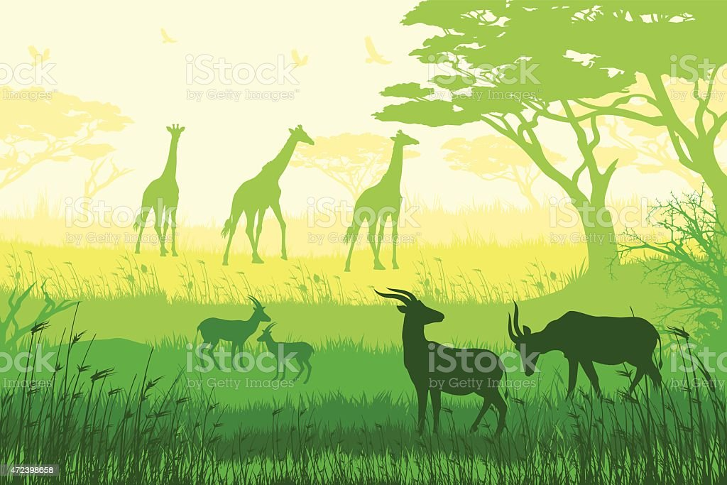 African wildlife and inhabitants of the jungle vector art illustration