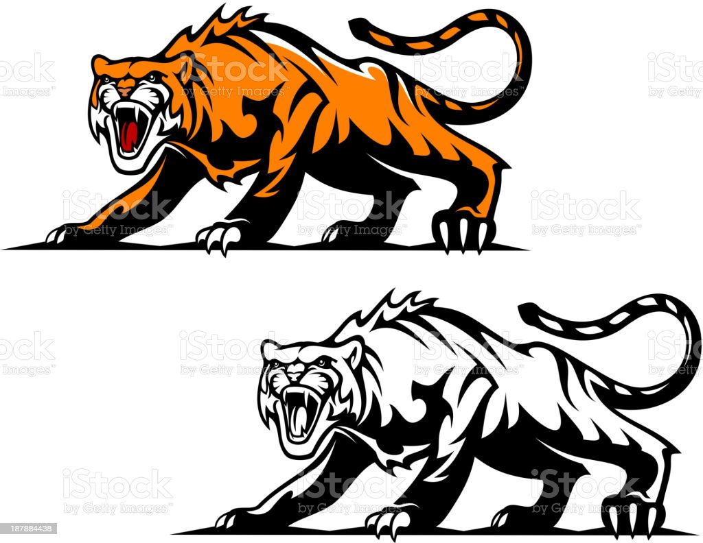Aggressive tiger royalty-free stock vector art