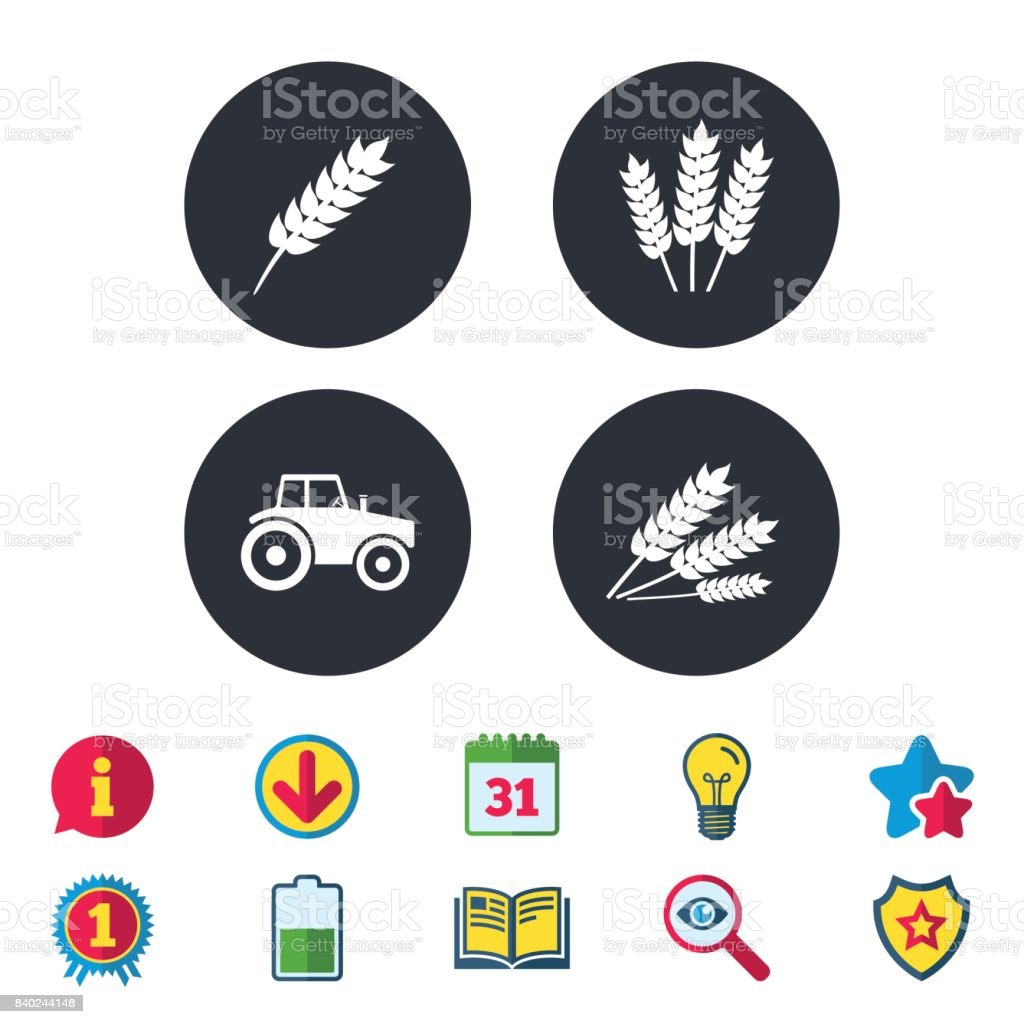 Agricultural icons. Wheat corn or Gluten free. vector art illustration