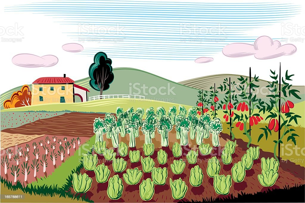 agricultural landscape royalty-free stock vector art