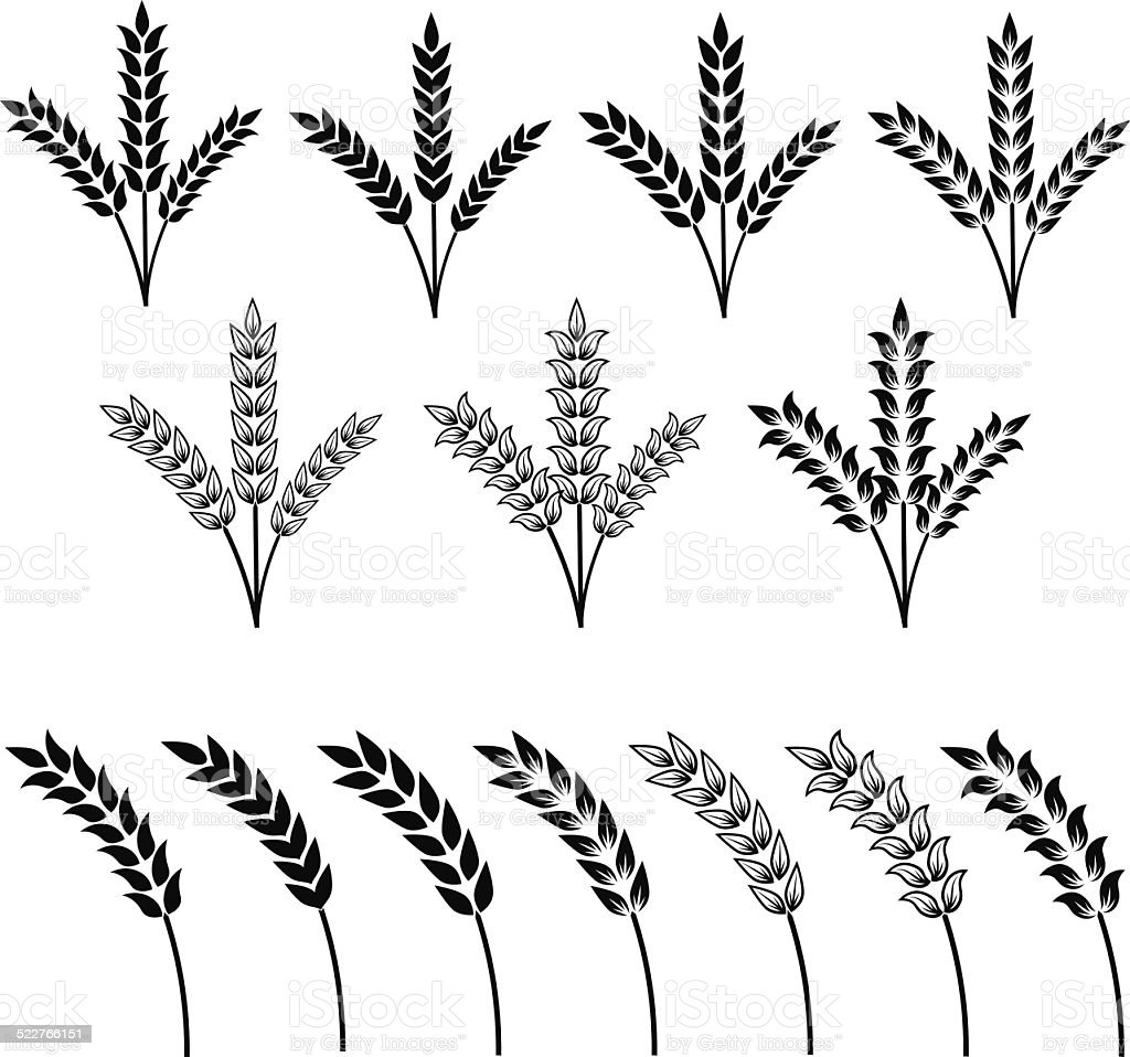 Agricultural plants in different styles - VECTOR vector art illustration