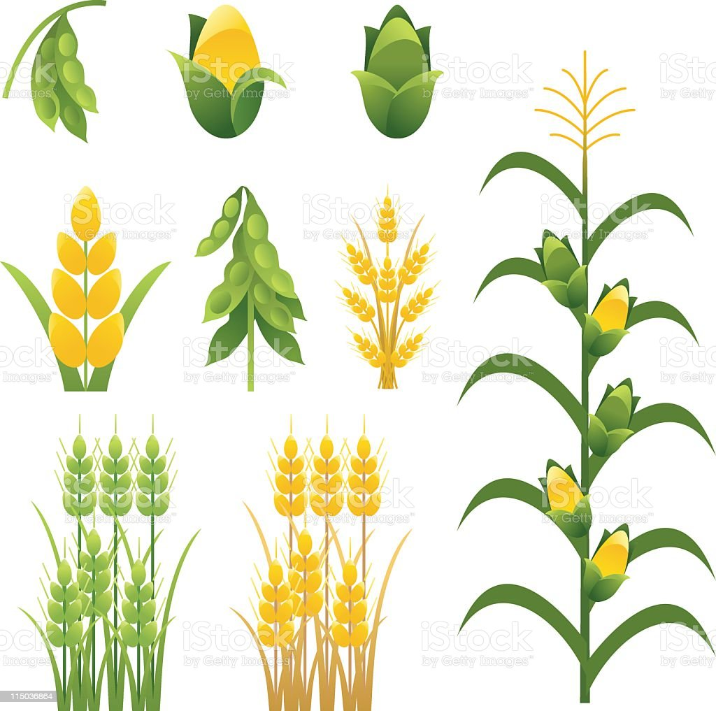 Agriculture farm crops and plants Icons set of nine vector art illustration