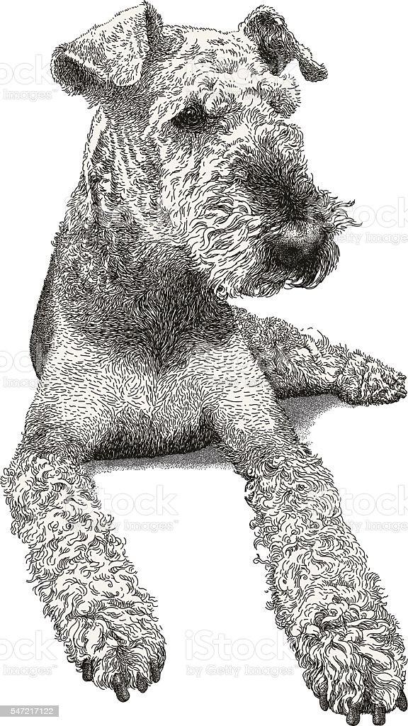 Airedale Terrier vector art illustration