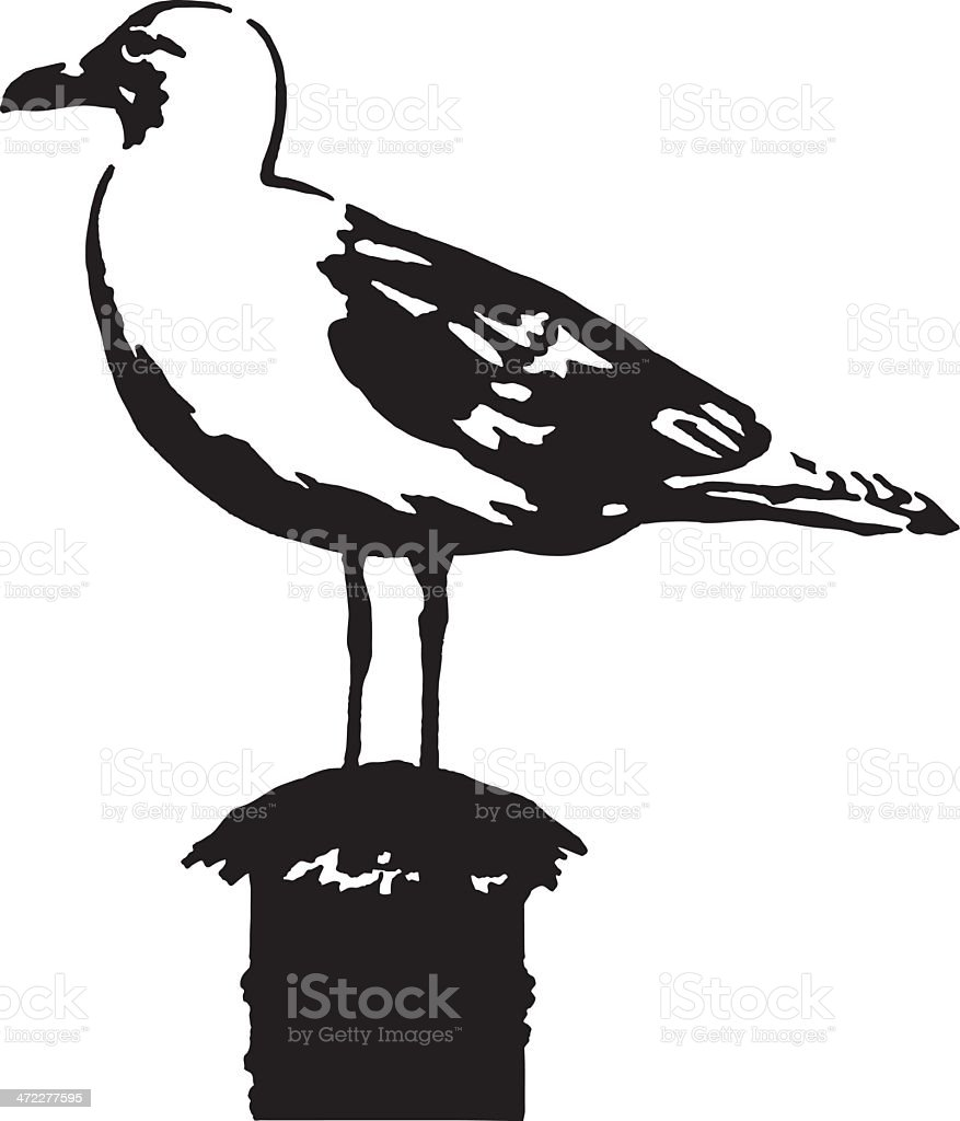 Albatross royalty-free stock vector art