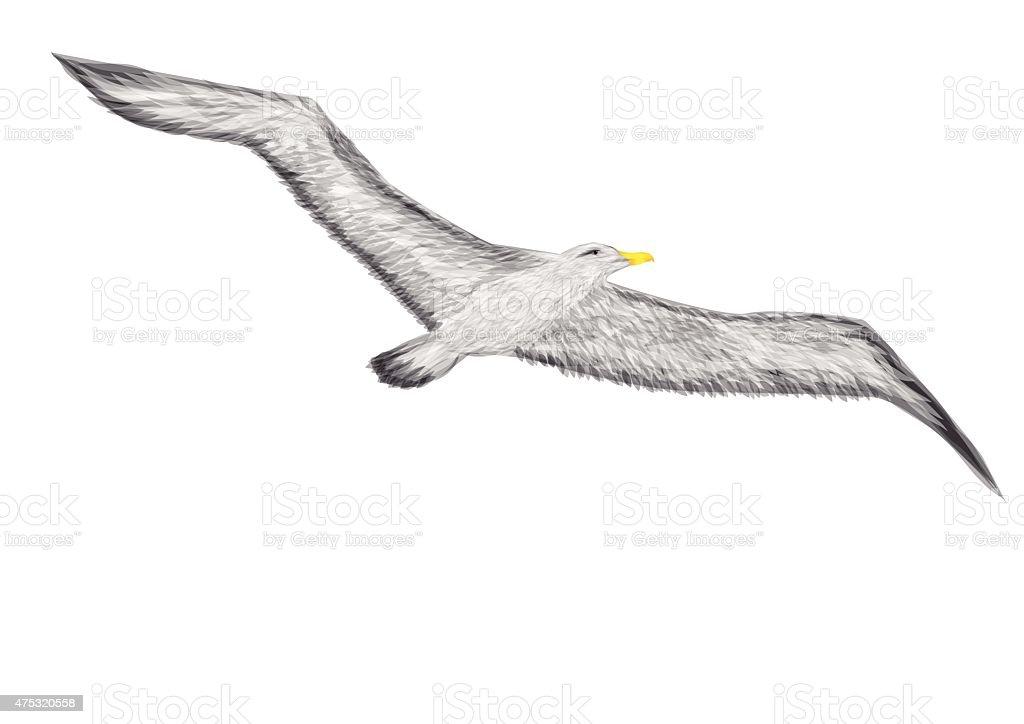 albatross vector art illustration