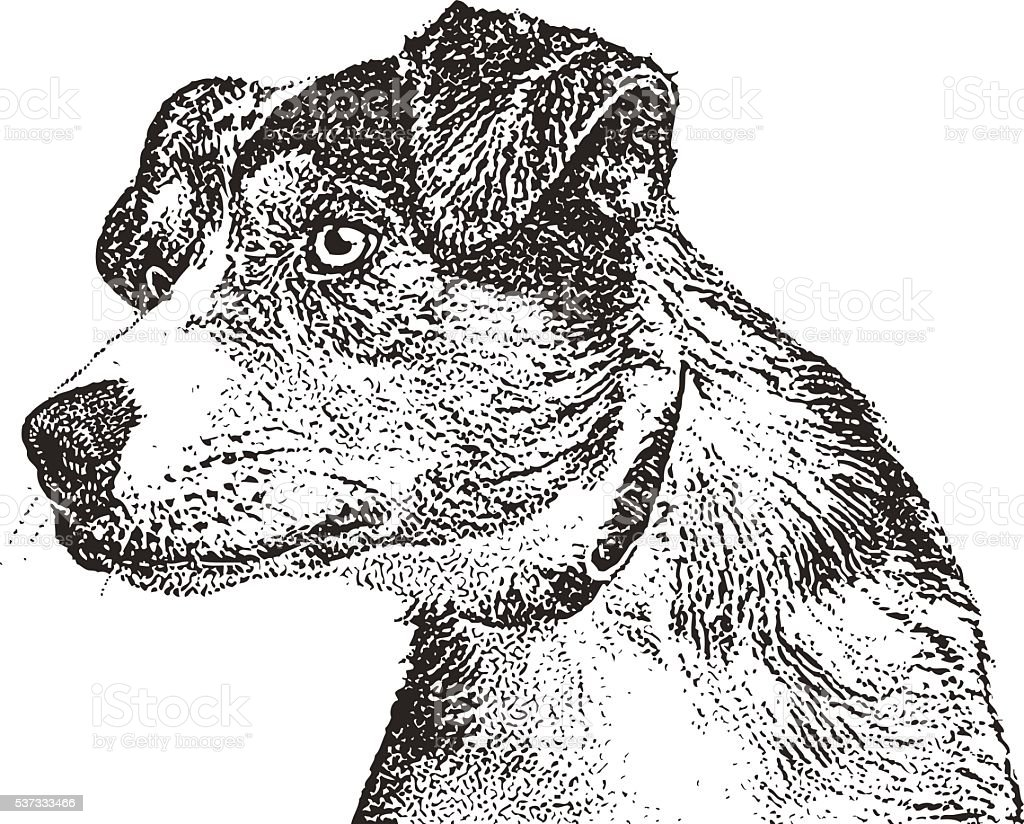 Alert Australian Shepherd Dog vector art illustration