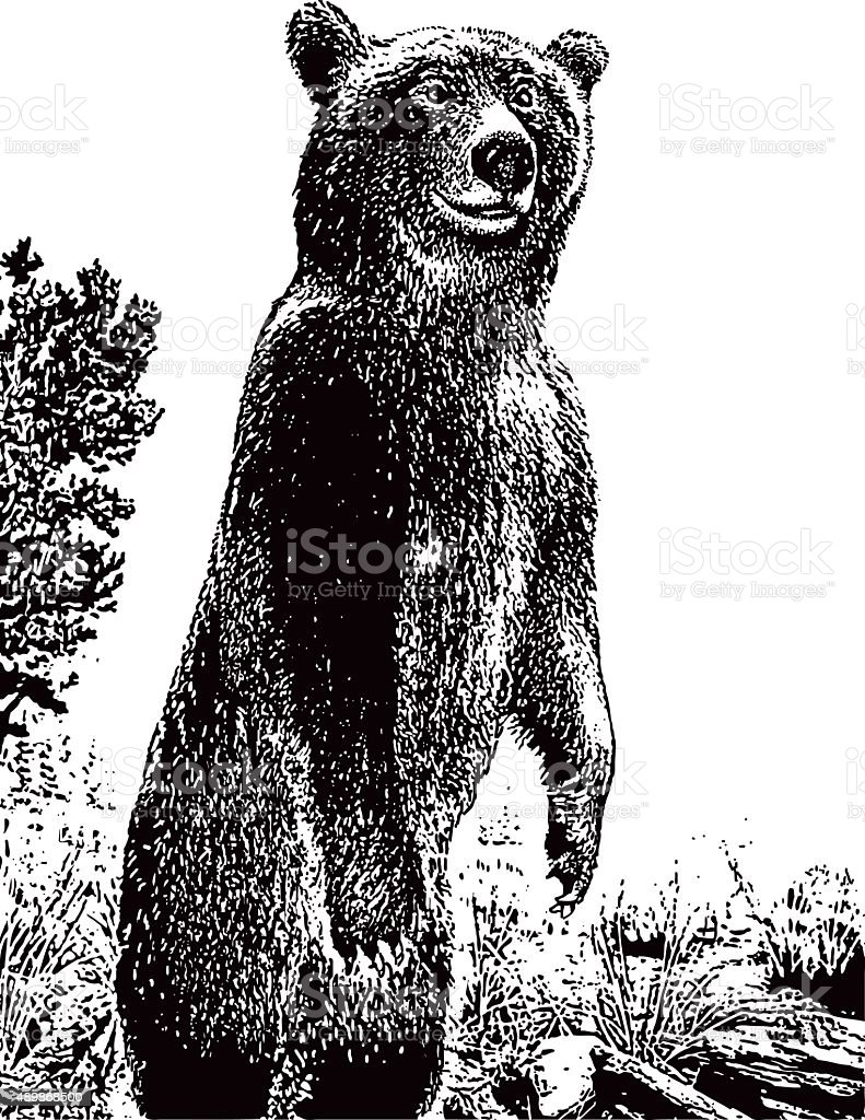 Alert Grizzly Bear Standing and Searching vector art illustration