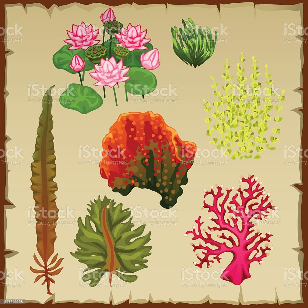 Algae and corals, decoration of the seabed vector art illustration