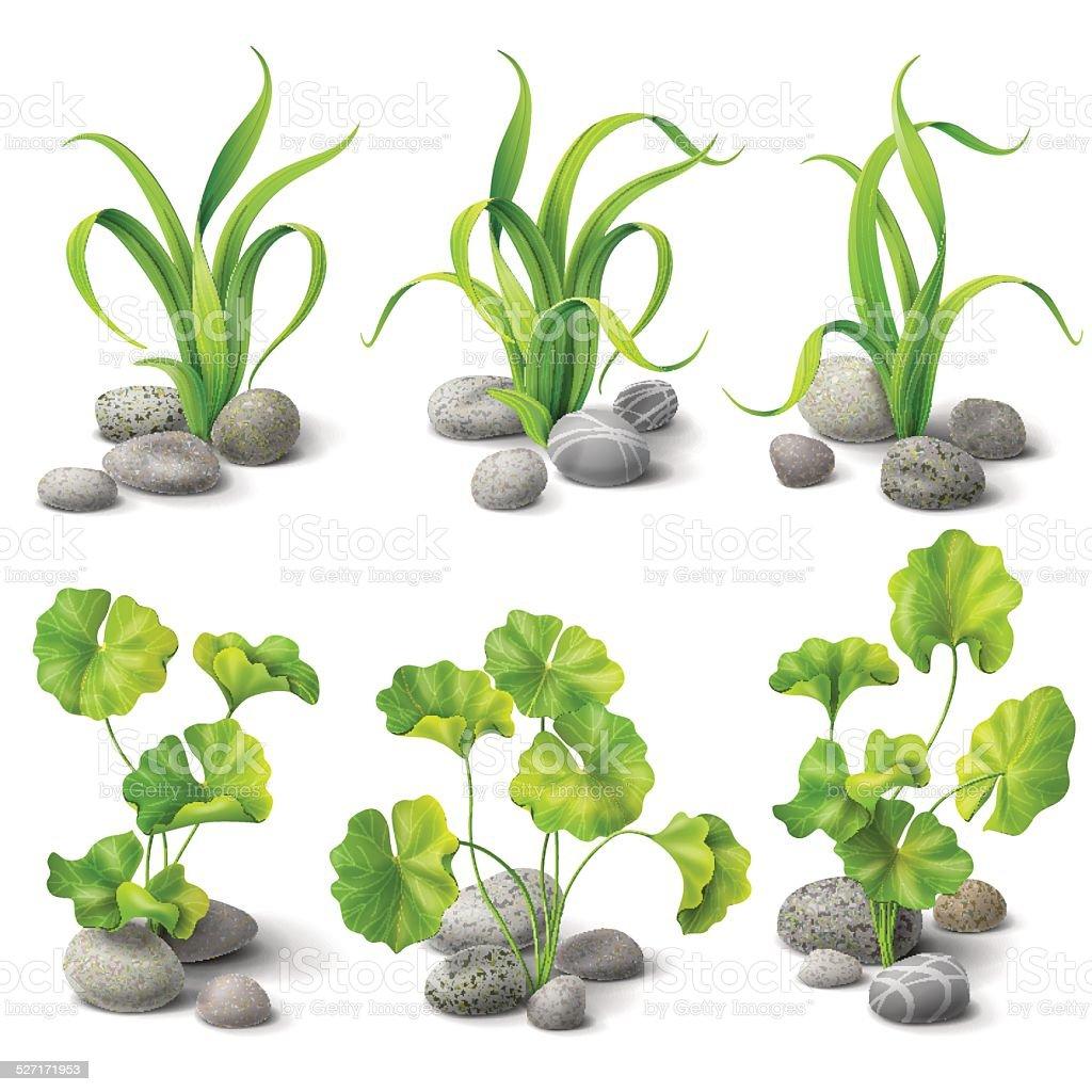 Algae set vector art illustration