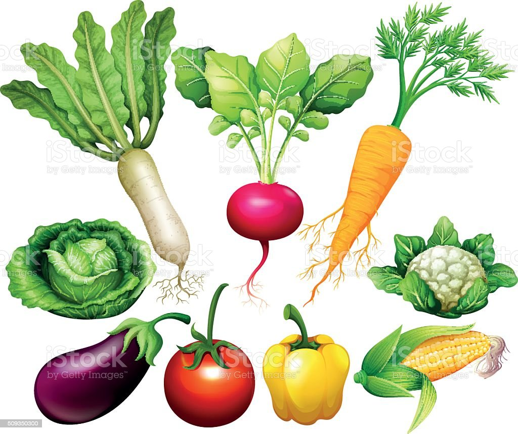 All kind of vegetables vector art illustration