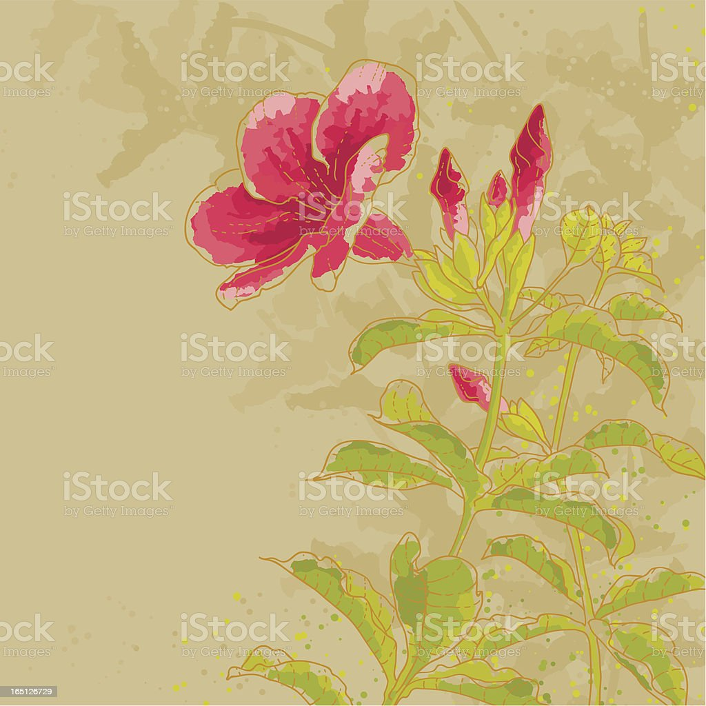 Allamanda flower on toned background royalty-free stock vector art