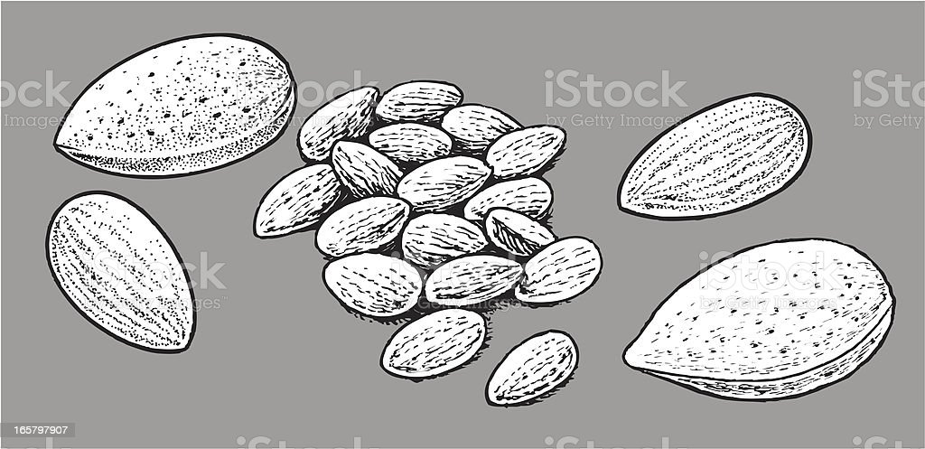 Almond - Nut royalty-free stock vector art