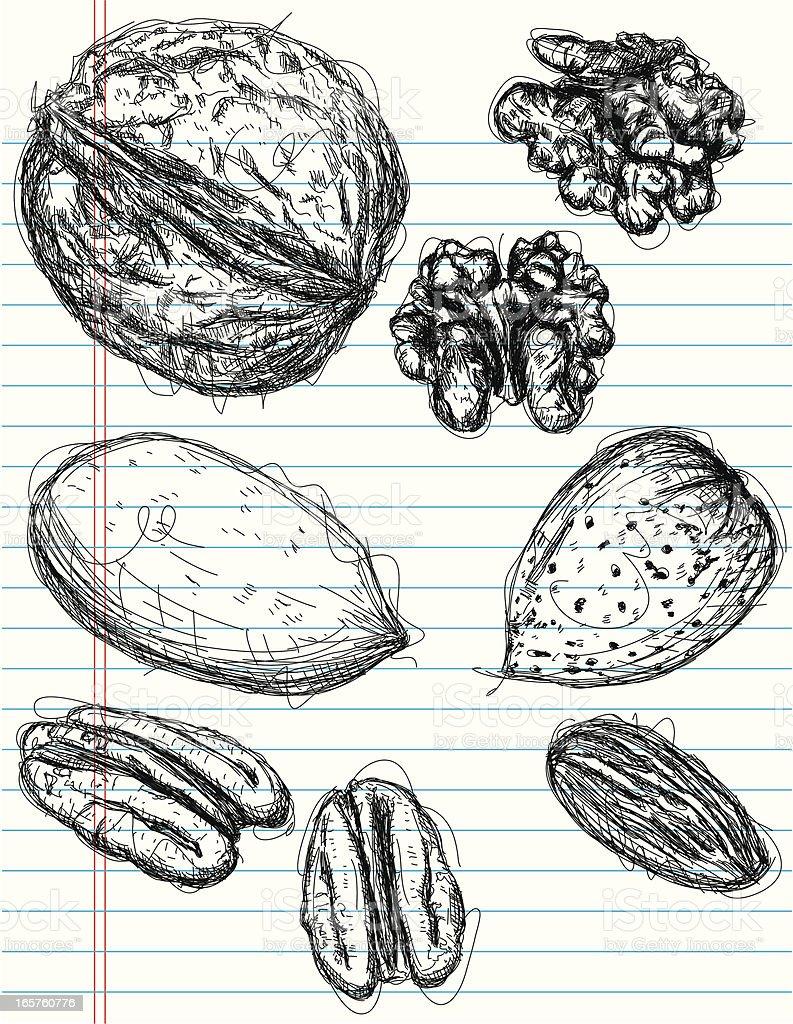 almond, pecan, and walnut sketches vector art illustration