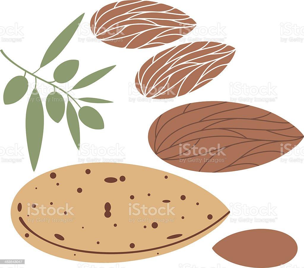Almond vector art illustration