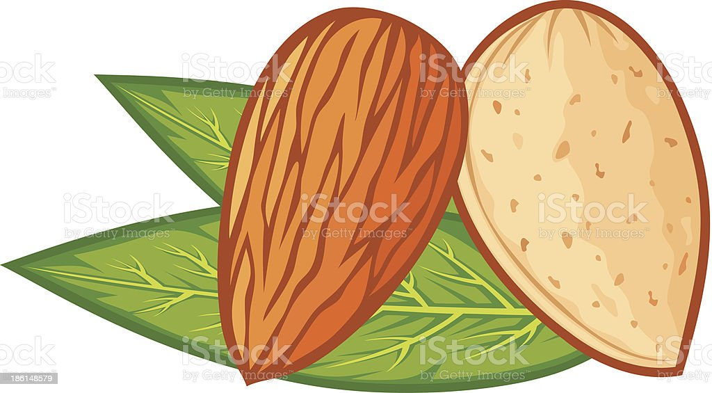 almond with leaves vector art illustration