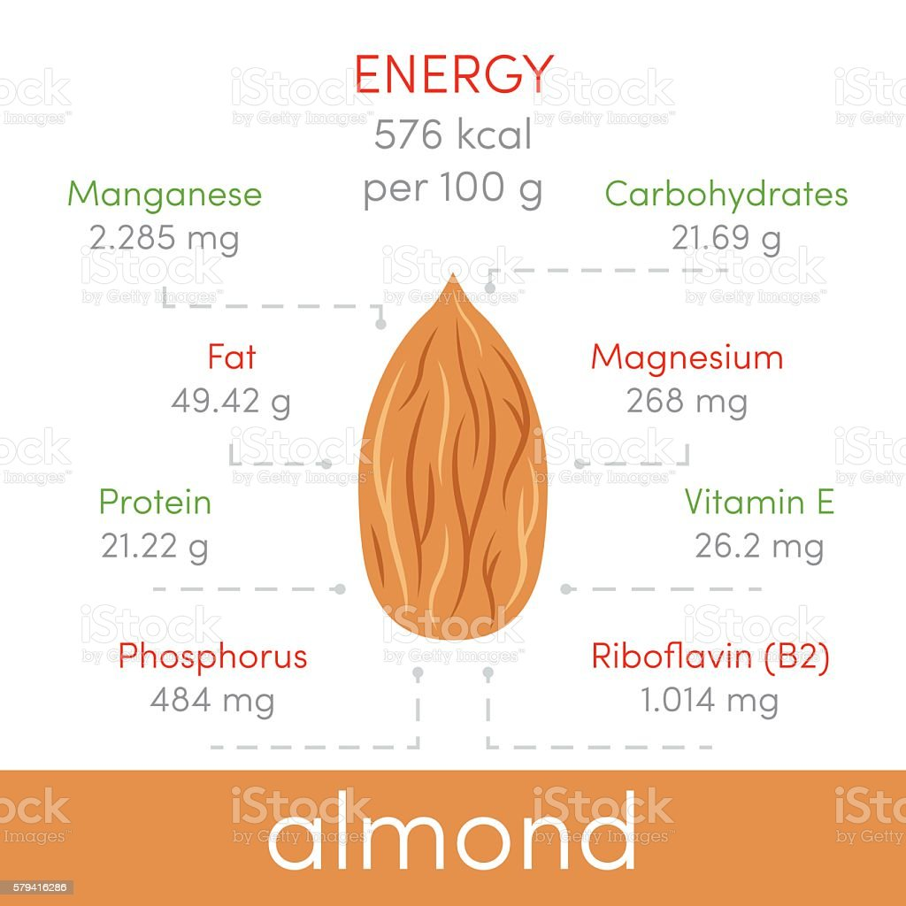 Almonds vector infographic vector art illustration