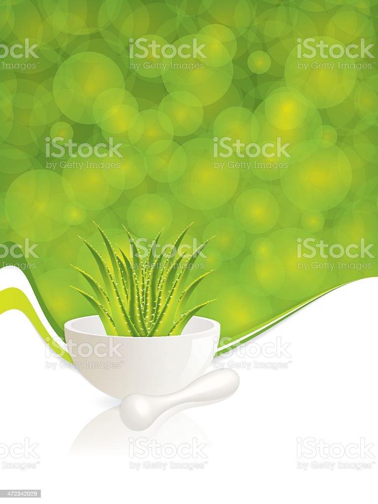 Aloe Vera royalty-free stock vector art