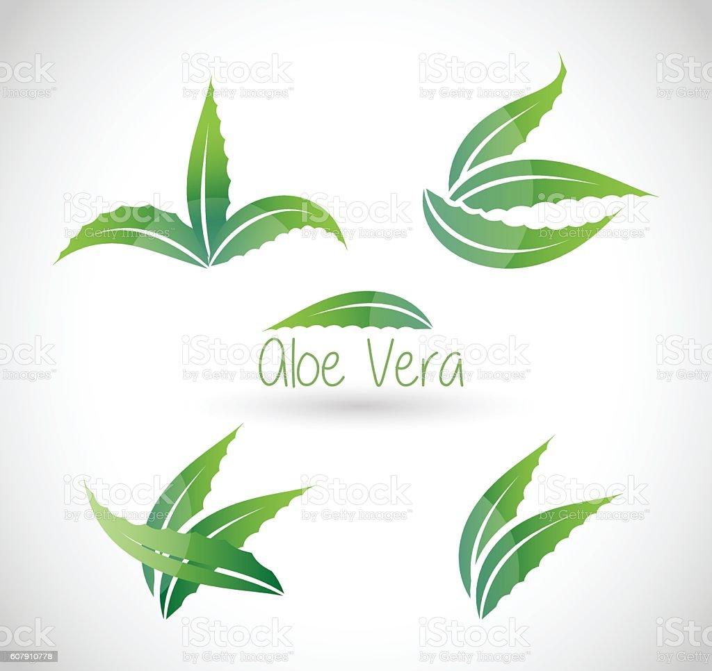 Aloe Vera vector illustration vector art illustration