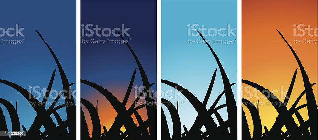 Alovera  (Vector) royalty-free stock vector art