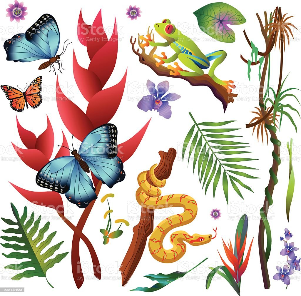 Amazon rainforest jungle plants and animals in color vector art illustration