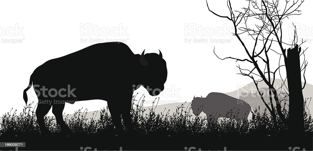 American Bison royalty-free stock vector art
