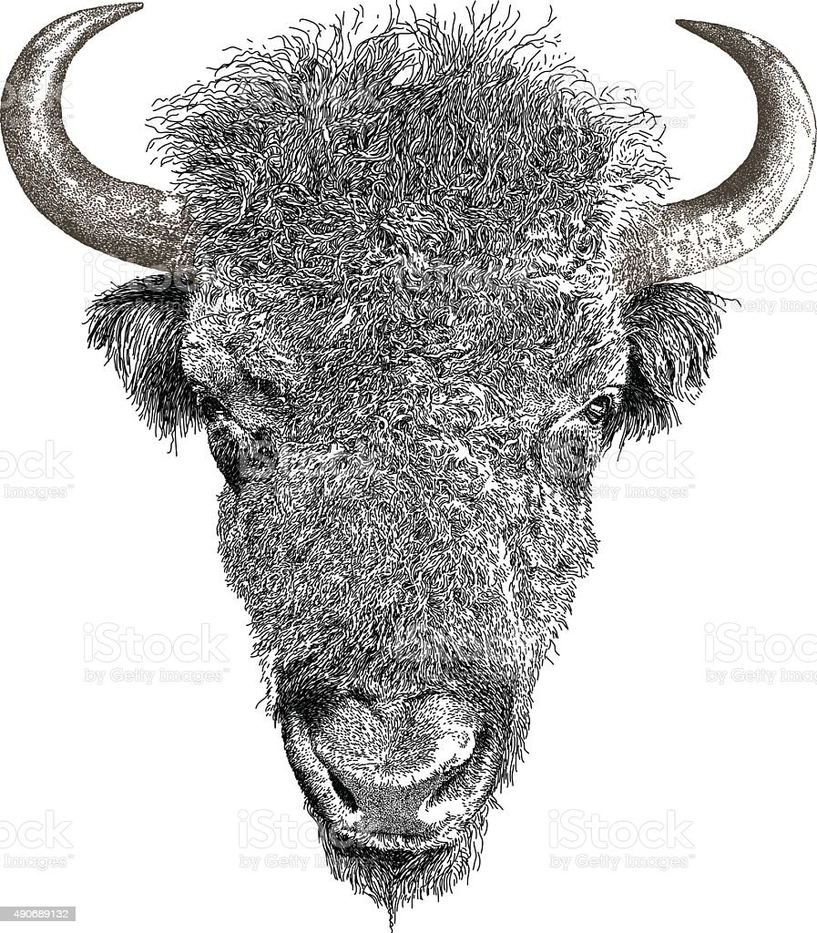 American Bison vector art illustration