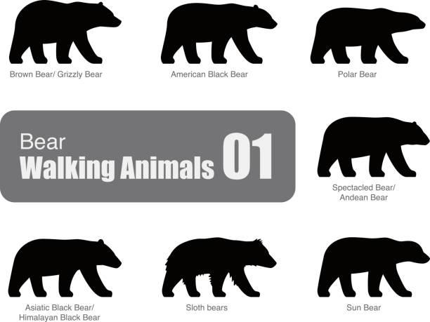 Bears Clip Art, Vector Images & Illustrations - iStock