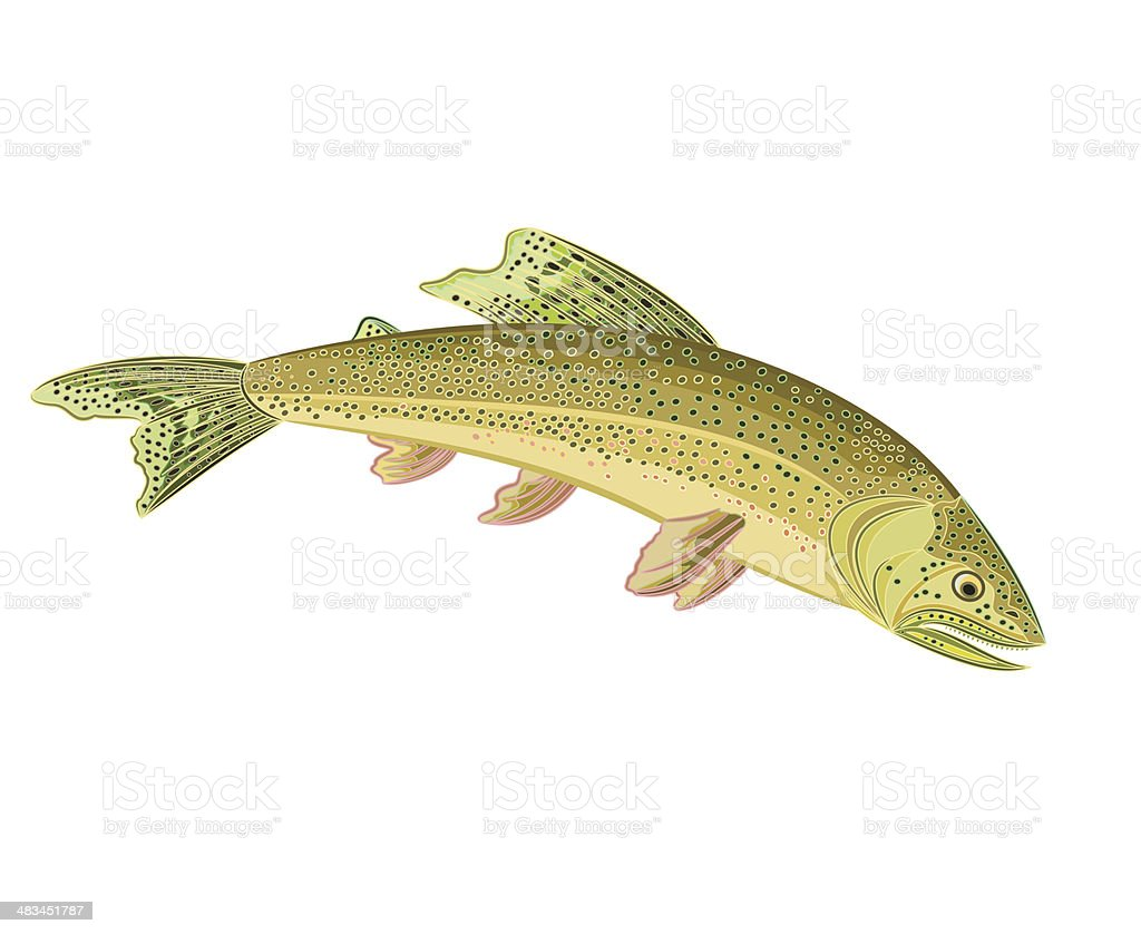 American brook trout vector art illustration