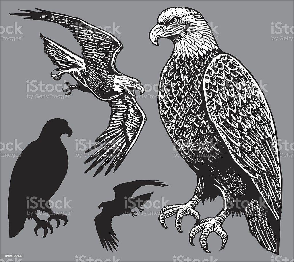 American Eagle - Bird vector art illustration