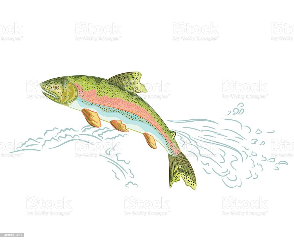 American rainbow trout jumps over the weir vector art illustration