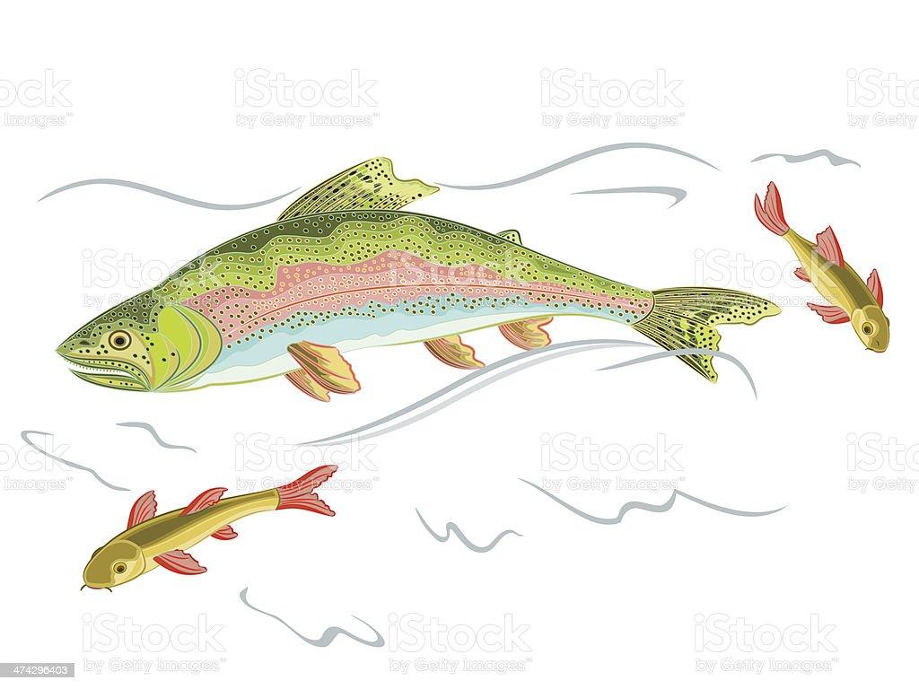 American rainbow trout vector art illustration