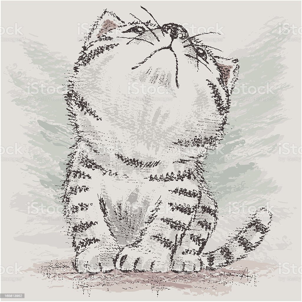 American Shorthair which is looking up at empty vector art illustration