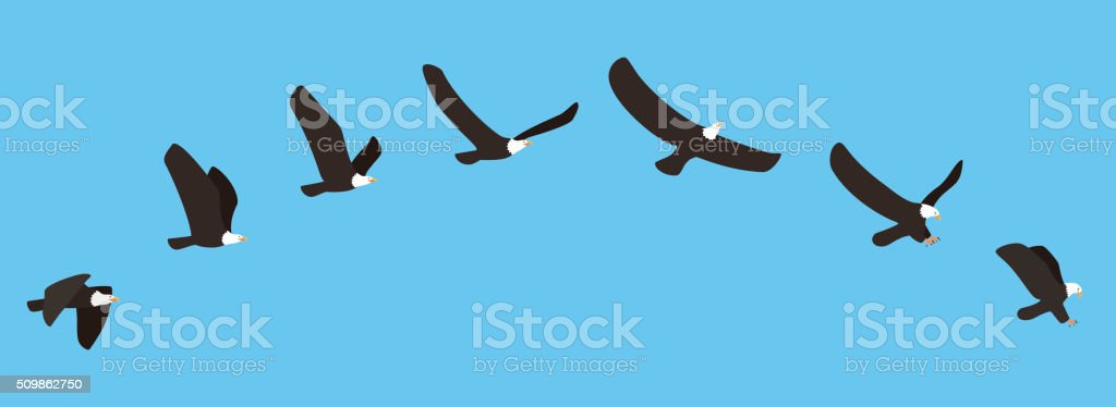 American white eagle flying and catching process, vector vector art illustration