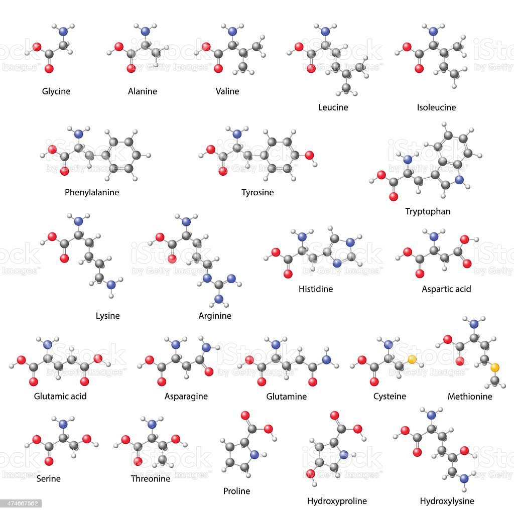 Amino acids -  main structural chemical formulas vector art illustration