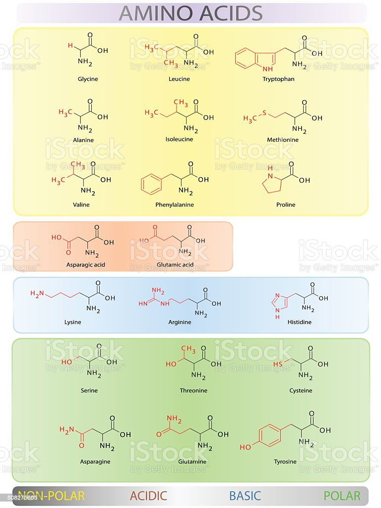 Amino acids table vector art illustration