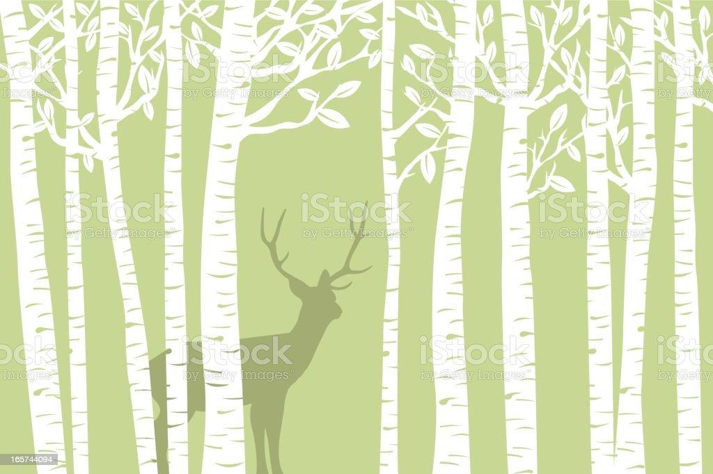 Among the Birch (Green) vector art illustration
