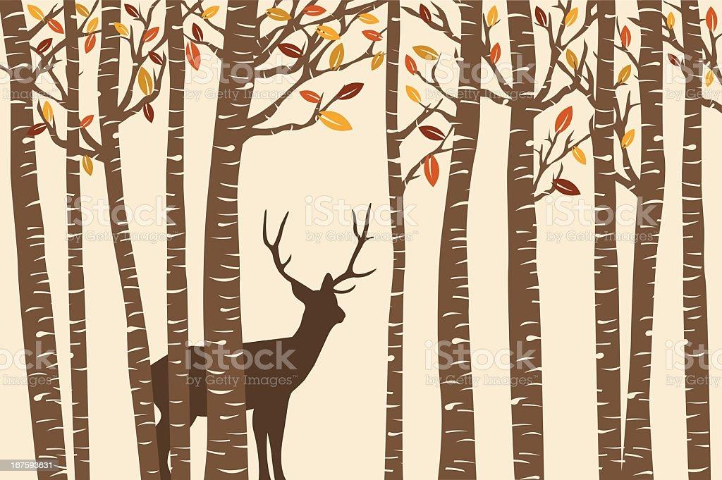 Among the Birch (Fall) vector art illustration