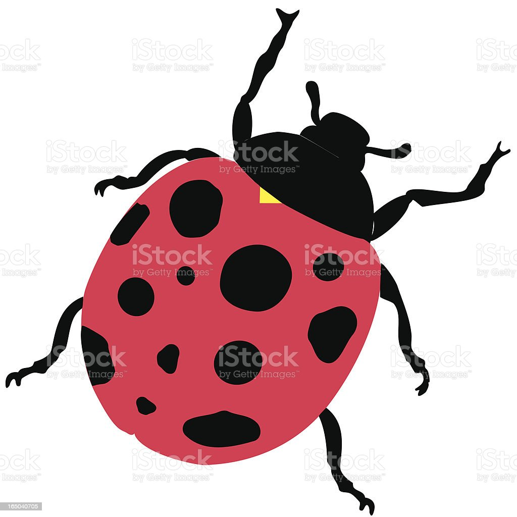An animated picture of a ladybug hand drawn by an artist vector art illustration
